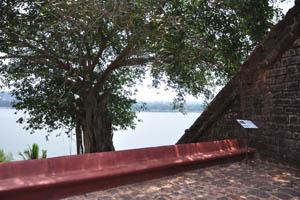 Крона огромного дерева около входа