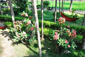 Гостевой дом Солнечный, территория полна цветов