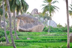 Огромный камень на рисовом поле