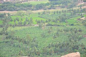 Пальмы и плантация бананов