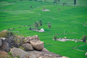 Микро храм посреди рисовых полей