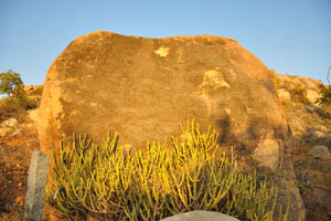 Молочай у подножия огромного камня