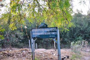 Лесной заповедник Вирупапурагадди