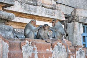 Обезьяны в храме