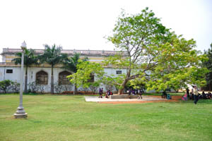 Зеленый двор