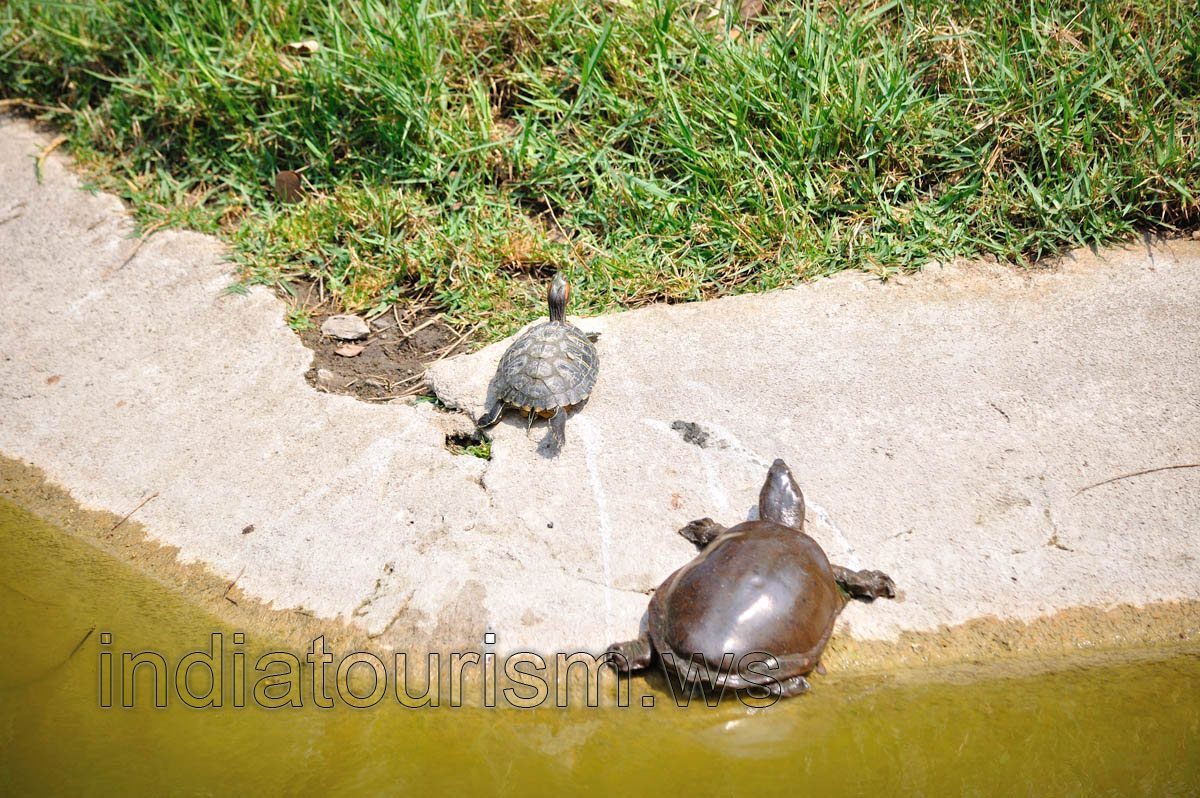 Small water turtles - Nehru Zoological Park - Hyderabad - Andhra ...