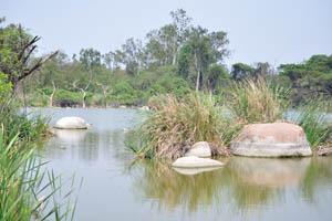 Озеро зоопарка