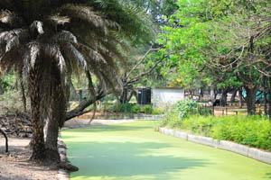 Небольшое озеро покрыто водорослями