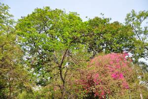 Безлистное дерево с черными плодами