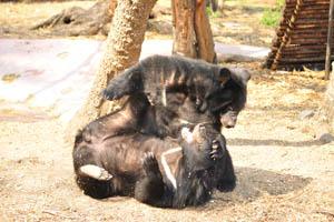 Медведи: забавные игры