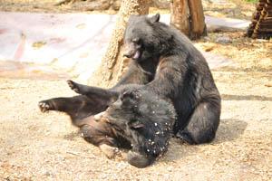 Комическое выражение лица медведя