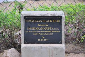 Табличка: 'Гималайский чёрный медведь'