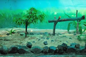 Мир рептилий: один из аквариумов
