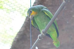 Попугаи Амазонки