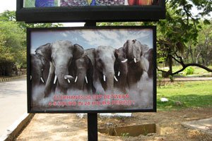 Слоны спят 4-5 часов в сутки!