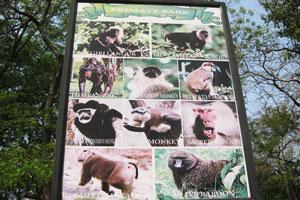 Парк приматов, информационное табло