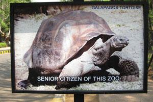 Галапагосская черепаха самая старшая в зоопарке
