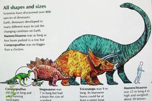 Все формы и размеры динозавров
