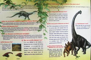 Различные вопросы о динозаврах
