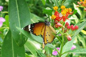 Бабочка с чёрным телом в белых точках