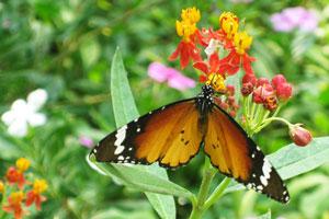 Мир бабочек: бабочка с белыми точками