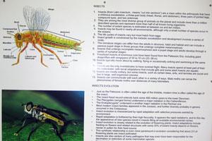 Инсектариум: эволюция насекомых