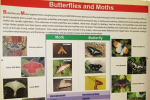 Бабочки и моли