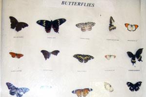 Коллекция бабочек и моли