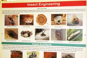 Инсектариум: инженерия насекомых