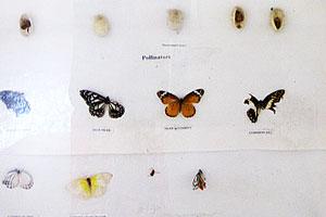 Коллекция полезных насекомых и опылителей