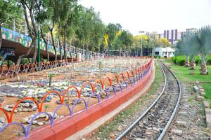 Пальмы Бисмарка были посажены вдоль железной дороги