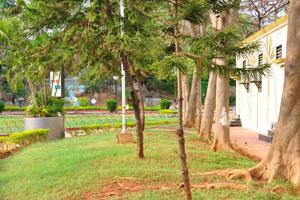 Деревья с корнями на поверхности