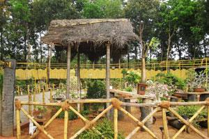 Бамбуковый забор Бонсай Чуда