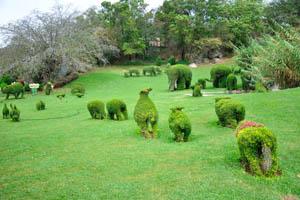 Сад-заповедник: таинственные животные