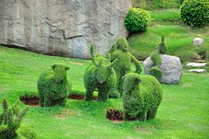 Сад-заповедник: овцы и козы