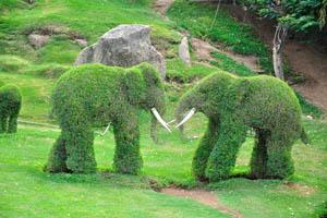 Сад-заповедник: маленькие слоны