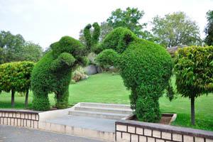 Сад-заповедник: слоны с поднятыми хоботами