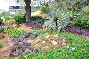 Суккулентные растения в саду кактусов