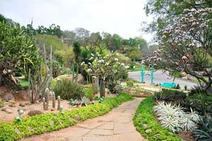 Кактусовый сад полон цветов