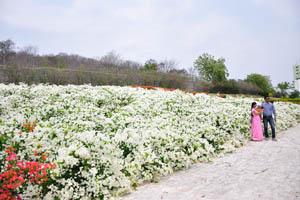 Океан белых цветов