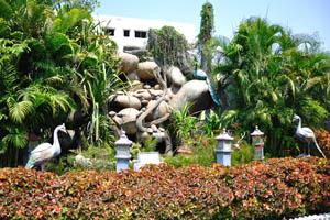Сады Windsor, ландшафтный дизайн с павлинами