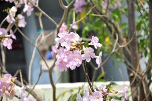 Бледно-сиреневые цветы с белыми прожилками