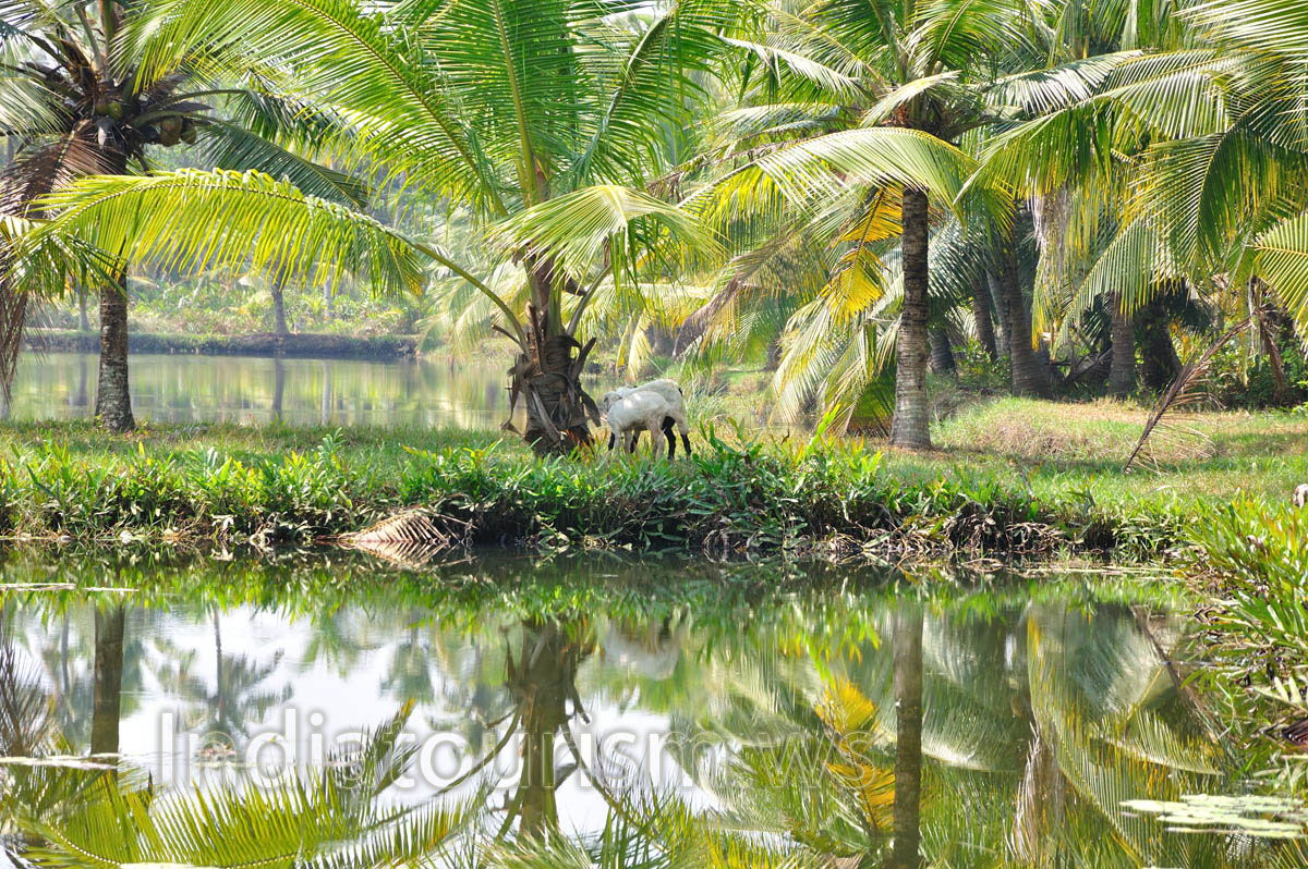 animal diversity in india The case of the speluncean explorers essay essay on political unity of india essay, term paper, coursework - unity in diversity in india essay pdf view now on our.