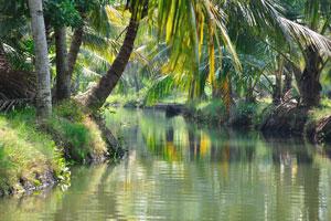 Мы устроили наше путешествие на каноэ из Коллама, типичного небольшого рыночного города в южной Керале