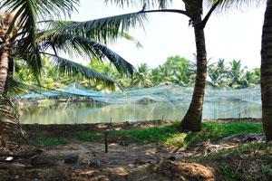 Керала имеет богатое разнообразие пресноводной рыбы. Сети над озером
