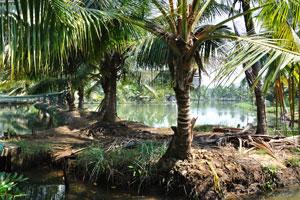 Заводи Кералы это одно из главных достопримечательностей в Индии