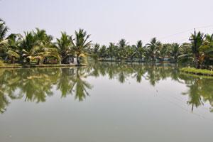 Поездка на каноэ по заводям, безусловно, рекомендуется как доступный и увлекательный способ исследовать эту замечательную часть Кералы