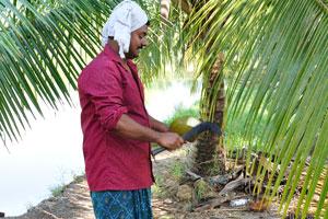 Местный житель готовит для нас кокосовый фрукт - тут это очень дешево