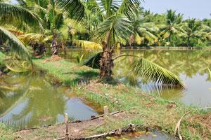 Поездка на каноэ это особый тип экскурсии, раскрывающей прошлое время Кералы