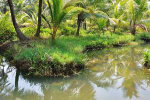Это удивительный способ прогуляться по рисовым полям и деревням близлежащих районов